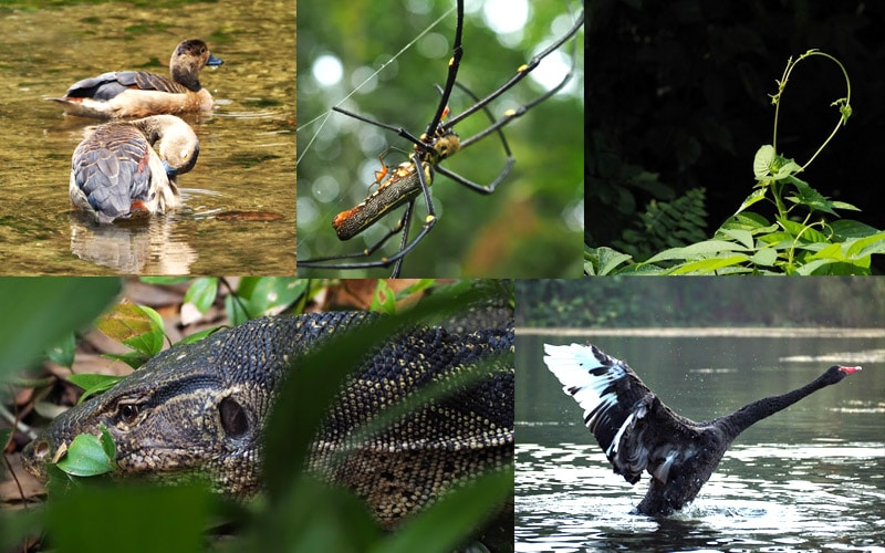 Participant Boon Kiat's Wildlife Photography