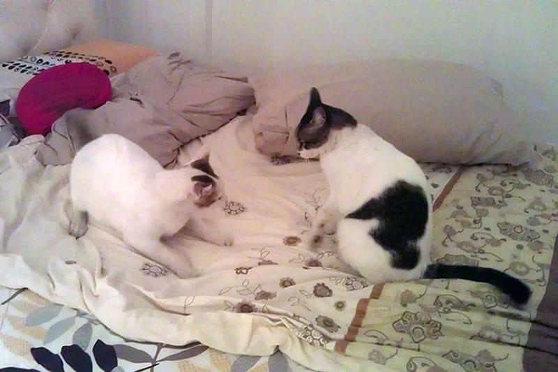 Cats: Kiki and Nancy