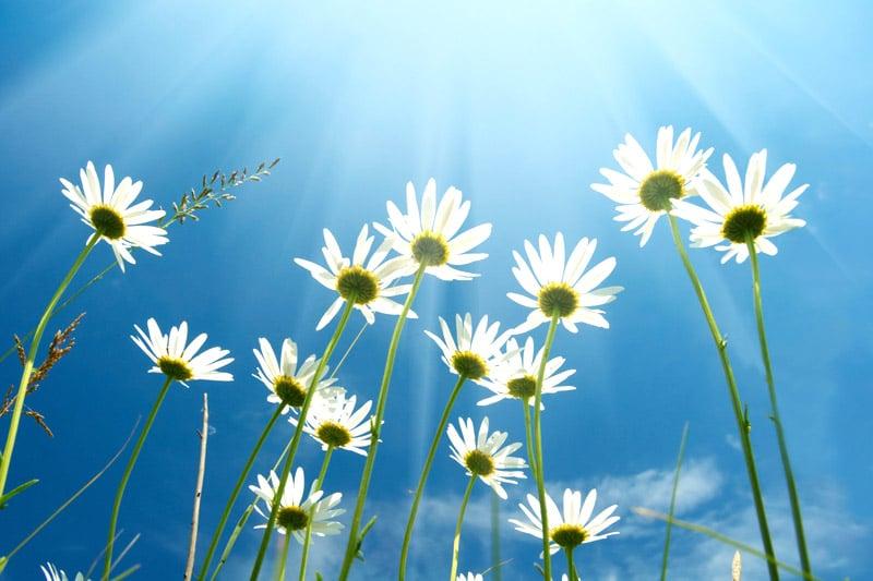White flowers basking in light