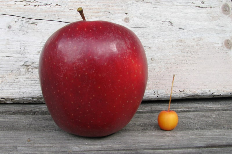 Big apple vs. small fruit