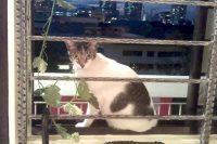 Nancy by the window