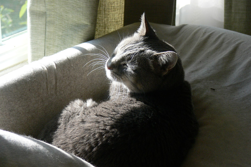 Cat squinting and relaxing in the sunlight