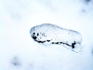 Foot Print in Snow