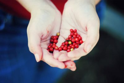 Hands holding red seeds