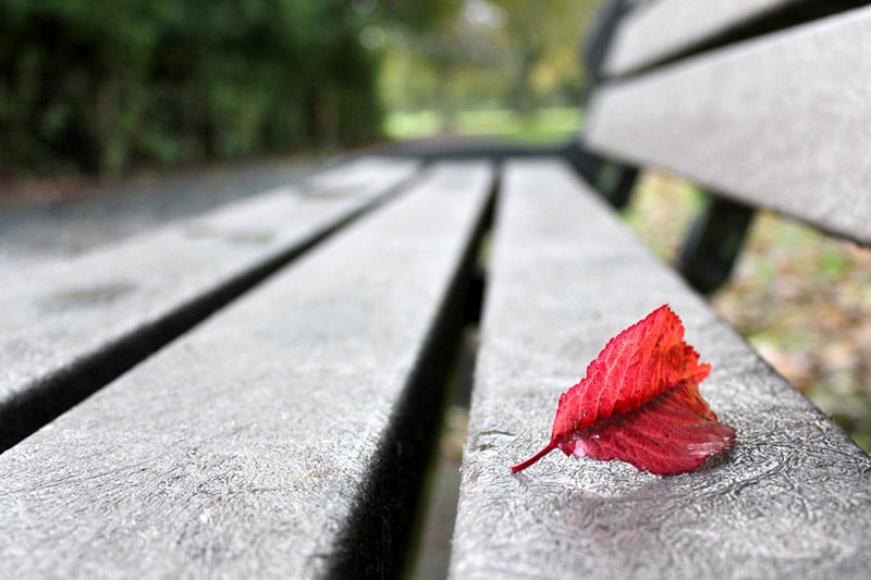 Red leaf on bench