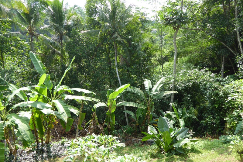 Ubud forest — View from the balcony